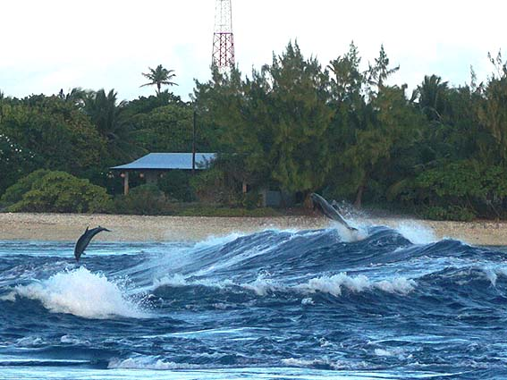 ランギロア ジャンプするイルカ
